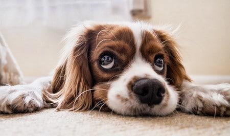 Frais couverts par une assurance chien