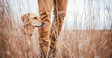 Techniques de camouflage pour la chasse